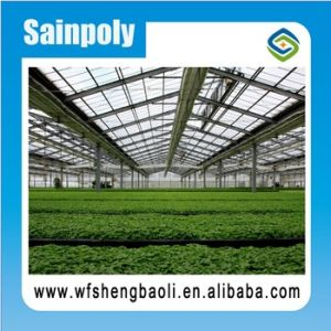Factory Price High Standard Glass Greenhouse pictures & photos