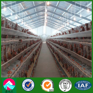 Light Steel Prefab Broiler Chicken House Raising (XGZ-pH034) pictures & photos