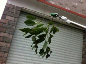 Ilot 120cm Stainless Steel Fruit Picker Garden Shear Pruner pictures & photos