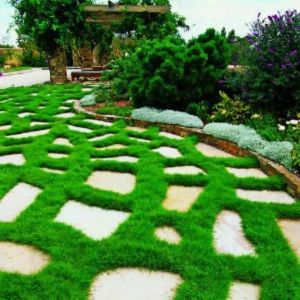 Keep The Garden Green of Artificial Turf pictures & photos