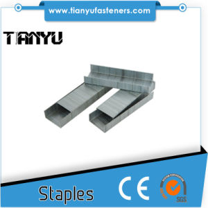 All Type and Size Galvanized Wire Staples pictures & photos