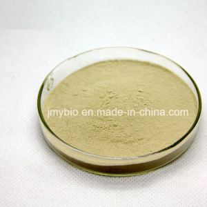 Pure Organic White Kidney Bean Extract 1%, 2% Phaseolin pictures & photos