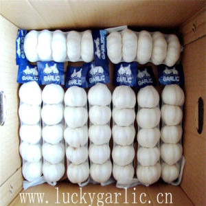Bright Sunshine Fresh Normal and Pure White Garlic pictures & photos
