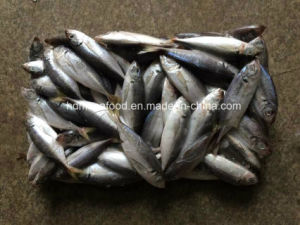 (14-18PCS/kg) New Fish Japanese Jack Mackerel for Sale pictures & photos