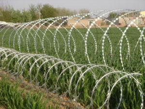 Razor Barbed Wire / Razor Barbed Wire Fencing / Concertina Barbed Wire Yaqi Supply 2016 pictures & photos
