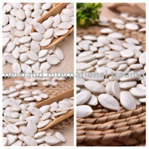 New Crop Dried Snow White Pumpkin Seeds with High Quality Origin of China for Wholesales