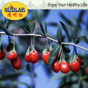 Medlar Lbp Nature Ningxia Wolf Berry pictures & photos