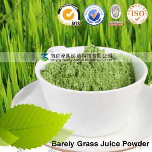 Haval Marked High Quality Dehydrated Barely Grass Juice Powder pictures & photos