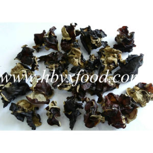 Agaric, Dried Organic Green Natural Black Fungus Slices pictures & photos