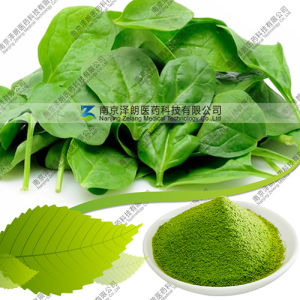 Natural Dehydrated 80 to 200 Mesh Spinach Powder pictures & photos