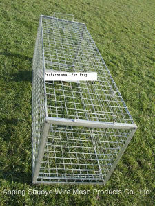 Galvanized Steel Wire Mesh Live Animal Trap for Squirrel pictures & photos