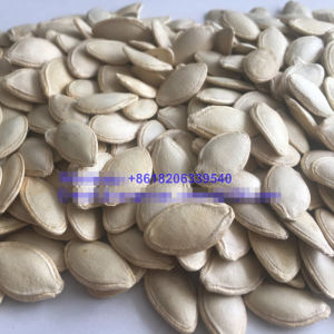 Raw Seeds Snow White Pumpkin Seeds pictures & photos