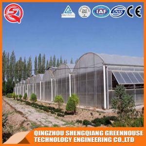 Vegetable/ Garden /Frame Indoor Growing Tent Plastic Greenhouse pictures & photos