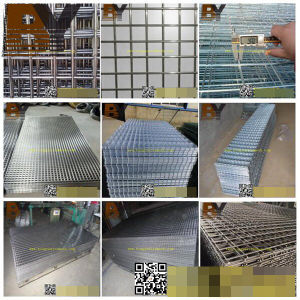 Galvanized PVC Coated Stainless Steel Aviary Welded Wire Mesh pictures & photos