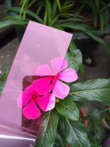 Factory Direct Sale 0.6mm Rose Red Polycarbonate Solid Sheet PC Sheet