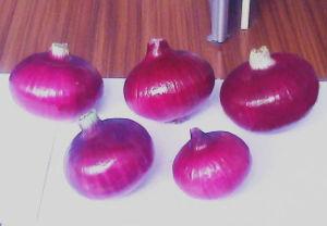 2015 High Quality Fresh Red Onion
