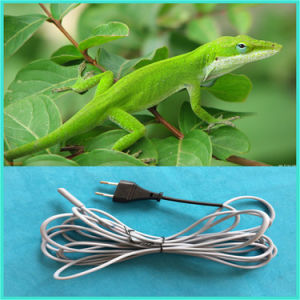 3m/25W Wholesale Silicone Reptile Heating Cable pictures & photos