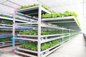Movable Seedbed for Agricultural Greenhouse pictures & photos