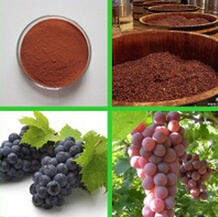 CAS No 84929-27-1 Skin Care Grape Seed Extract pictures & photos
