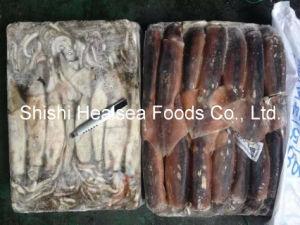 Illex Squid Frozen on Board pictures & photos