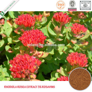 Rhodiola Rosea Rosavins 1% ~ 15% Rhodiola Rosea Seeds pictures & photos