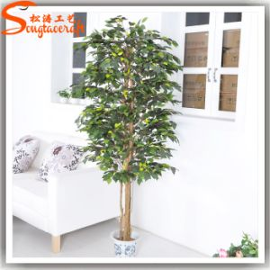 Artificial Bonsai Ficus Tree for Outdoor or Indoor Decoration pictures & photos