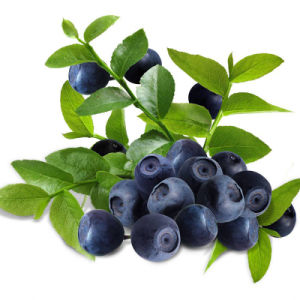 cGMP Factory Supply European Bilberry Extract, Anthocyanidins 1-25% pictures & photos