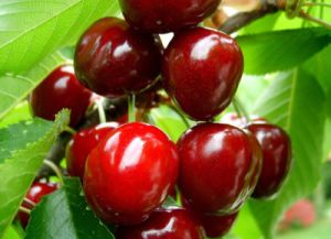 Cherry Juice Powder for Beverage and Food Flavor pictures & photos
