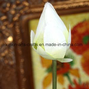 Factory Wholesale Artificial Lotus Flowers Fake Flowers pictures & photos