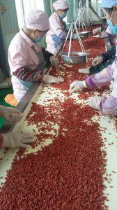 Organic Goji Berry USDA Certified, Ningxia Goji Berry, Chinese Wolfberry pictures & photos