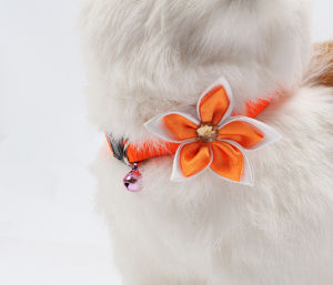 Pet Colorful Products Cat Collar (C011) pictures & photos