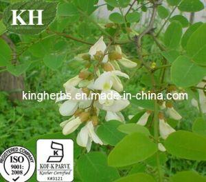 100% Natural Sophora Japonica Extract: 95%-98% Quercetin HPLC pictures & photos