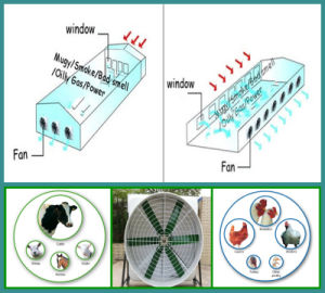 Ventilation Industrially Exhaust Fan (OFS) pictures & photos