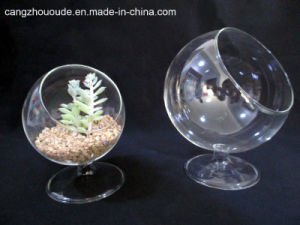 Art Clear Glass Vase Moss Plants Bonsai Plants Creative Gifts pictures & photos