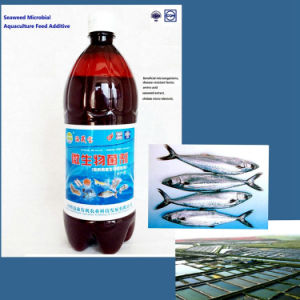 Seaweed Microbial Aquaculture Feed Additive