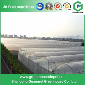Multi-Span Tunnel Greenhouse Structure with High Quality pictures & photos