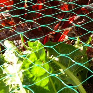 Polyethylene Vineyard Netting Fruit Garden Anti Bird Net pictures & photos