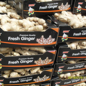 New Crop Ginger pictures & photos