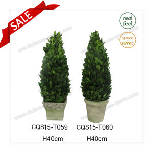 H40cm Grass Plant Type and Natural Leaf Boxwood Flower pictures & photos
