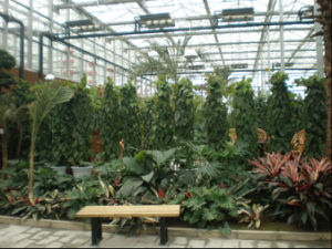 Glass Greenhouse Ecological Sightseeing Greenhouse-Helen pictures & photos