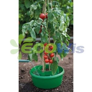 Watering Tomato Plants in Pots pictures & photos