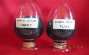 Soluble Seaweed Extract Powder or Flake for Plant Food pictures & photos