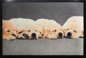 Printed Non-Woven Door Mat, with Eye-Catching Colorful Dog Patterns pictures & photos