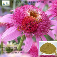 Factory Directly Supplied Echinacea Purpurea Extract Cichoric Acid 4%