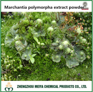 Liverwort / Marchantia Polymorpha Extract Powder with 20%, 50% Saponin pictures & photos