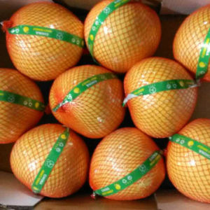 Gap Certificated Chinese Fresh Pomelo