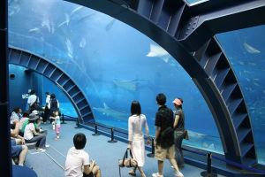 Factory Manufacturing Sea World Acrylic Aquarium Tank