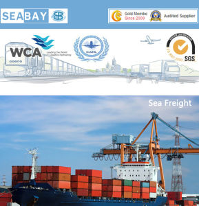 China Ocean Freight Services From Shanghai/Guangzhou/Shenzhen/Ningbo/Xiamen to Belgium pictures & photos