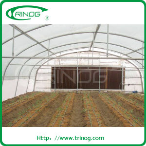Plastic Tunnel Greenhouse with Gothic Roof pictures & photos