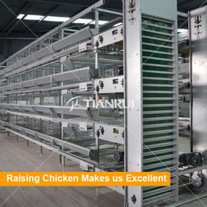 Good Price H Type Automatic Poultry Cage pictures & photos